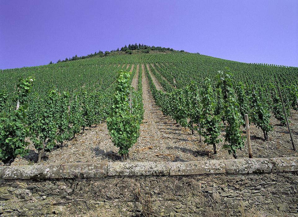 Weingut Othegraven im Besitz von Günther Jauch (© Othegraven)